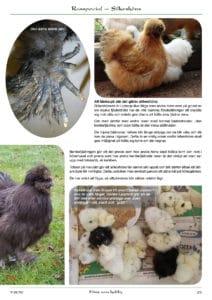 Höns som hobby flerfärgade kycklingar